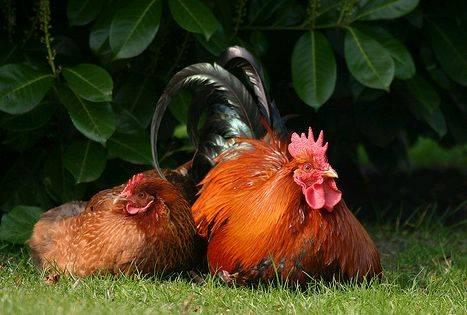 Az ivaros szaporodás típusai az állatvilágban
