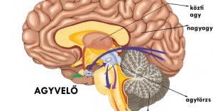Az ember idegrendszere