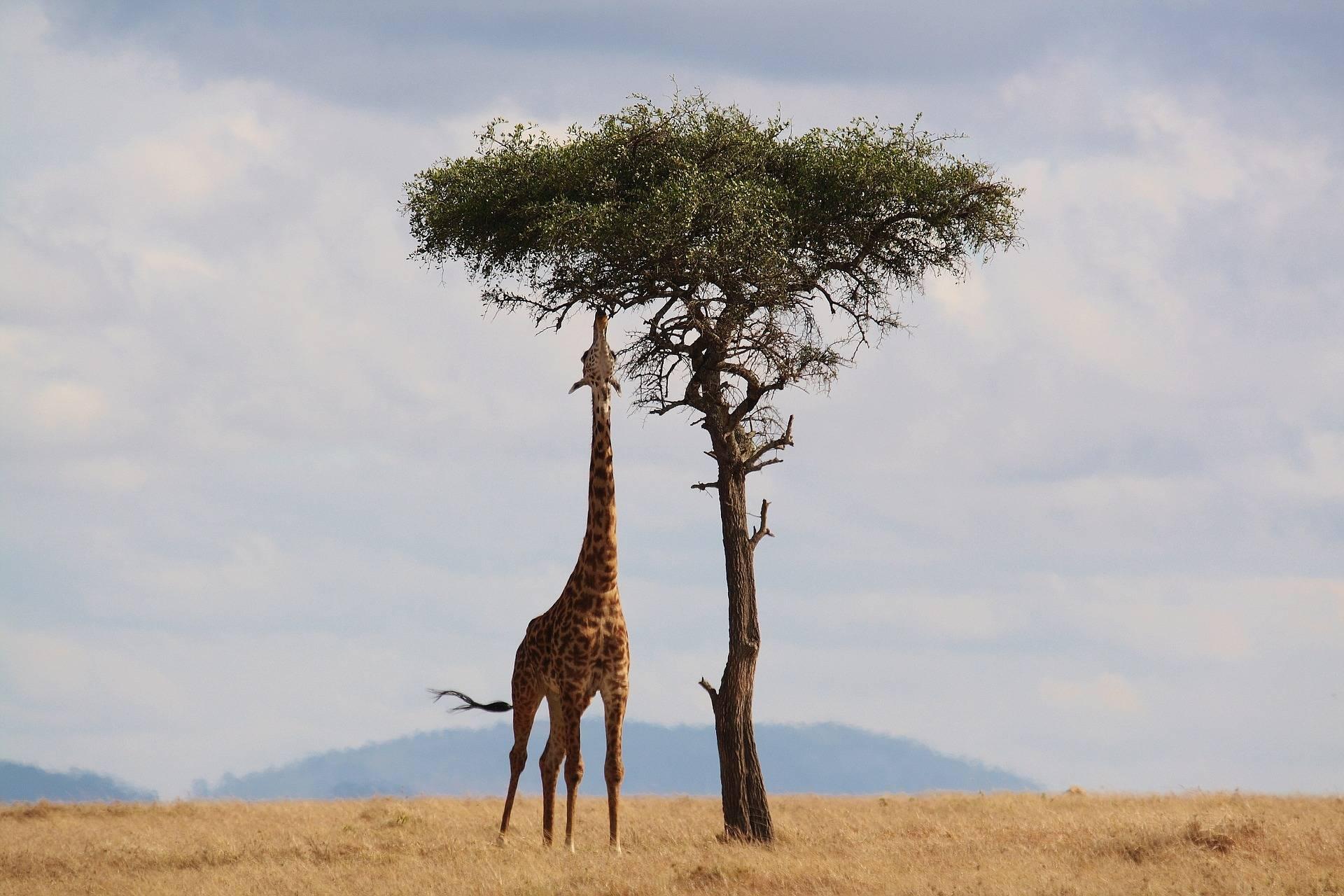 Afrika – szerepe a világgazdaságban