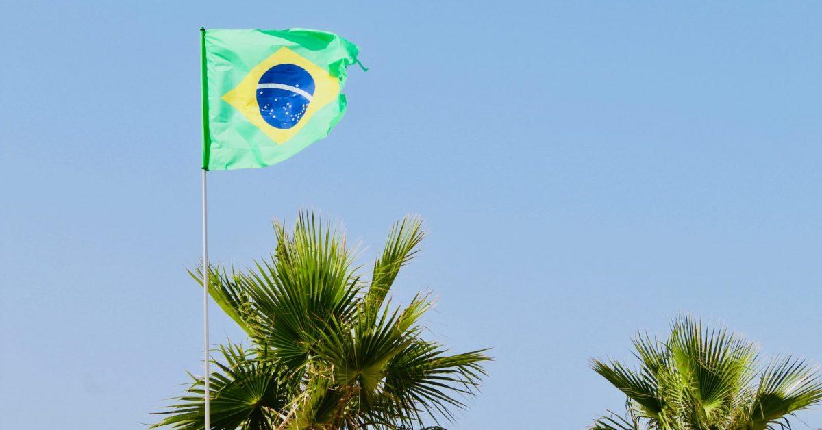 Brazil flag beside green palm trees
