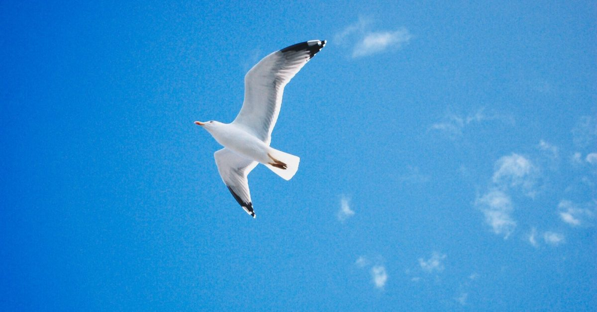 low angle photo of seagull